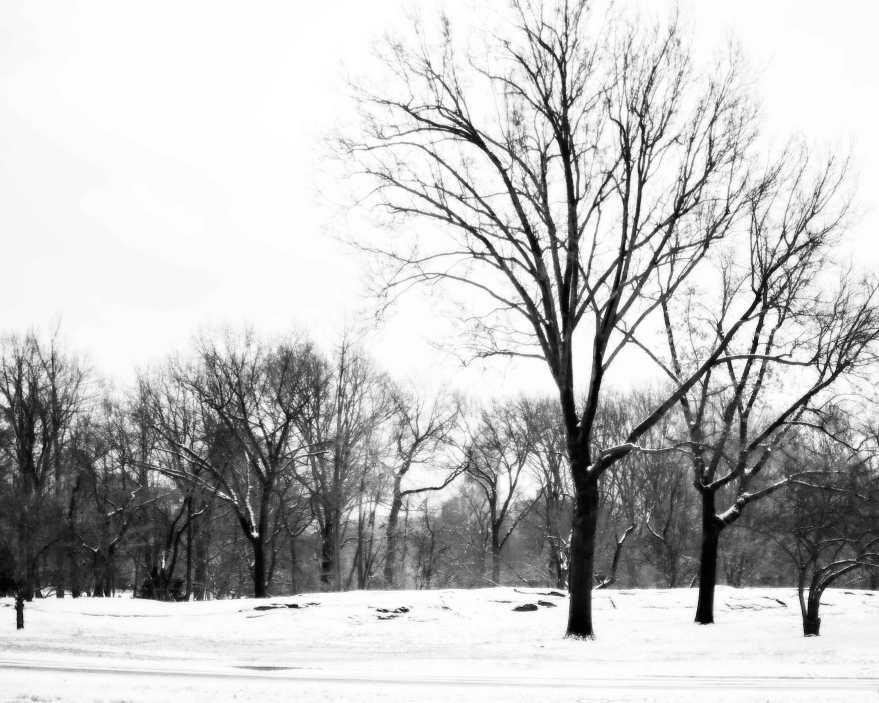 1.10.2015-Central-Park-Winter
