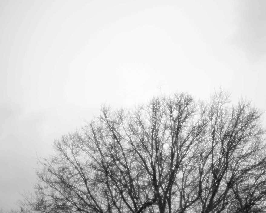 1.10.2015-Tree-Top